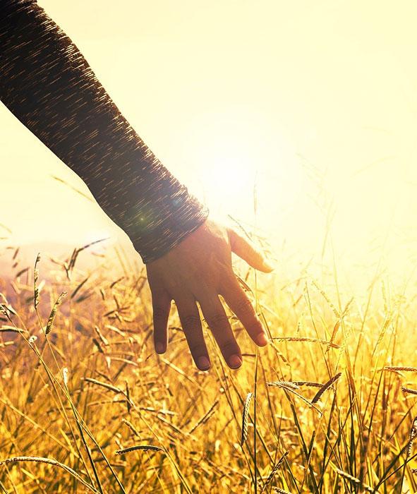 Hand streift Getreide in strahlendem Sonnenschein